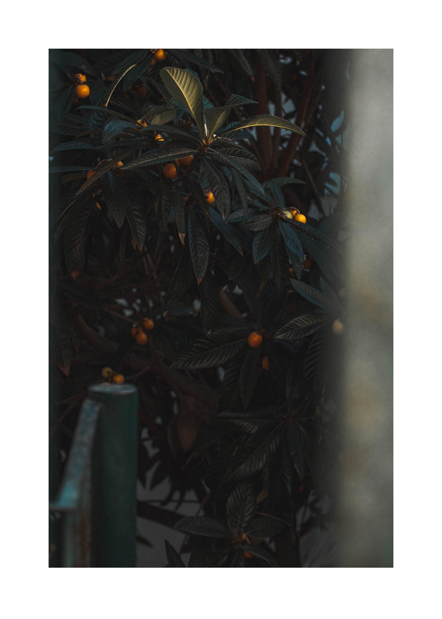 Citrus posters