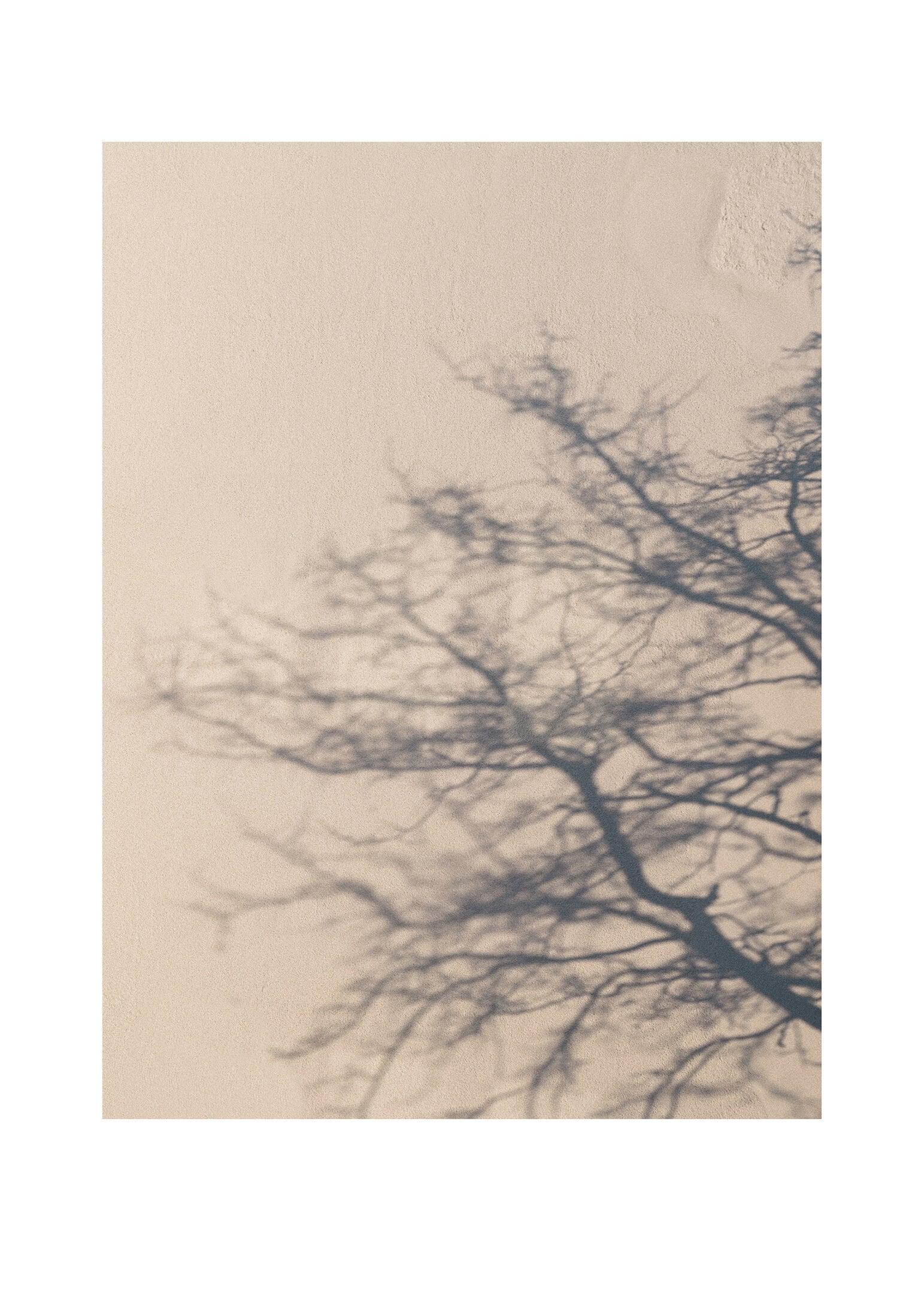 Trädskugga poster