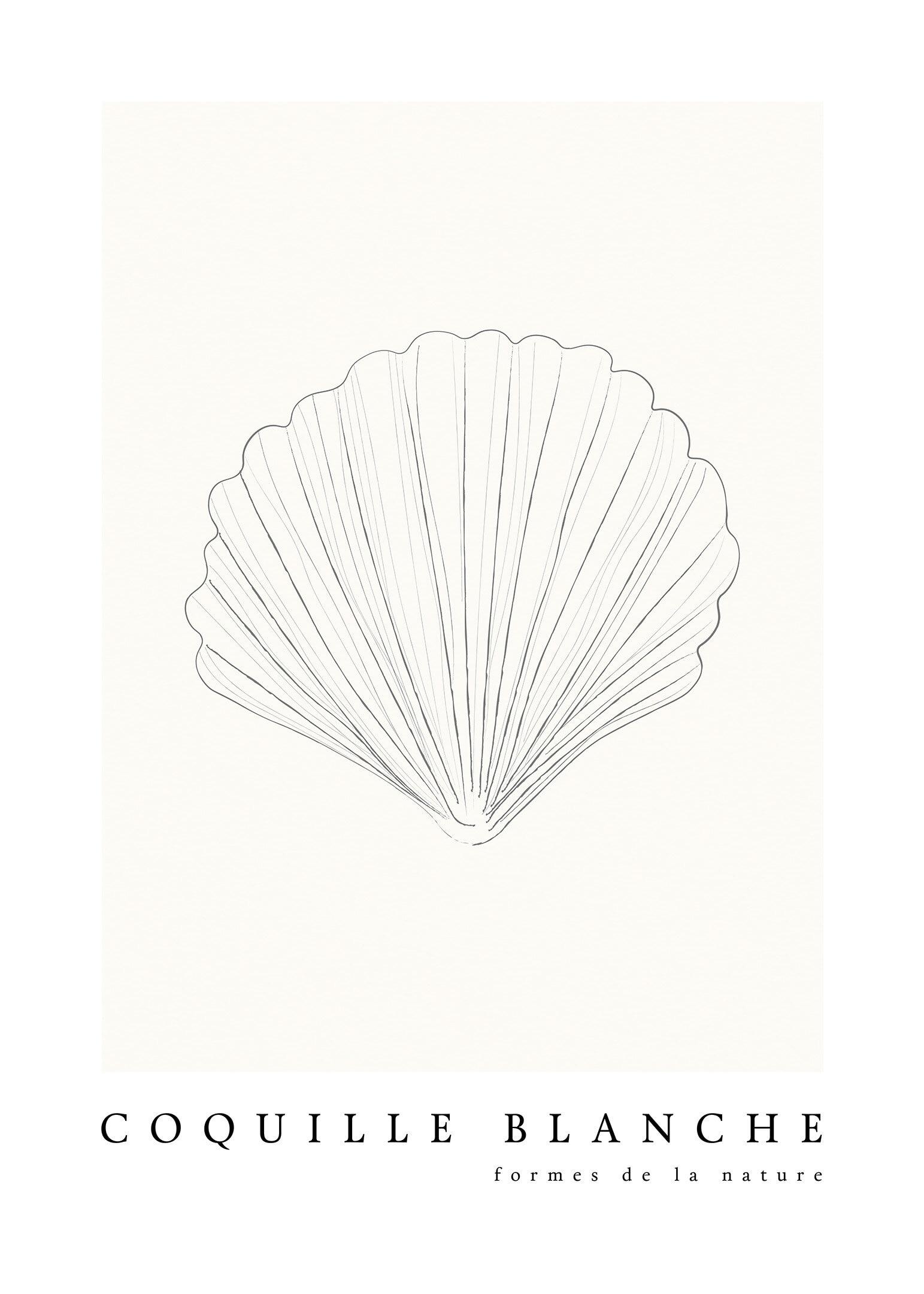 Strandsnäcka poster