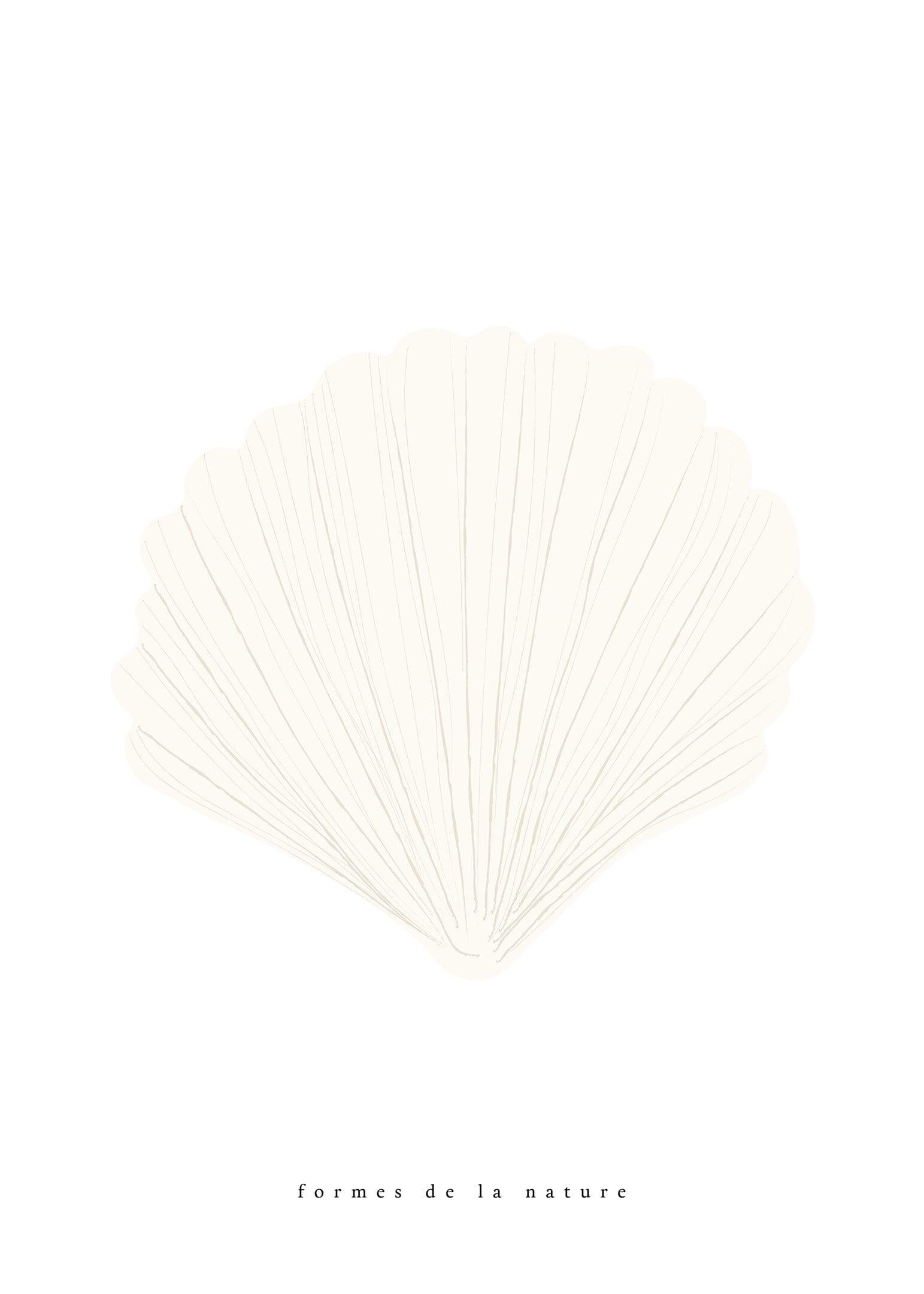 Havssnäcka vit poster